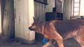 Fallout4TrailerAn012.png