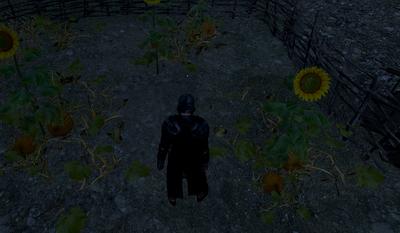 Gvsunflowerpumpkin.png