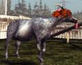 Sweet Autumn Goat