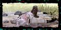 Scenes Geralt unconscious.png