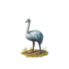 Whiteostrich.png