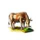 Thoroughbredcow.png