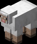 Weißes Schaf.png