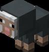 Baby Gray Sheep.png