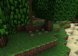 Mushrooms under tree.png
