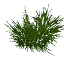 Larchleaves.png