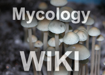 Growing with bulk substrates | Mycology Wiki | Fandom