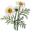 Crafting Resource Chamomile.png