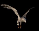 Hawk 1.png