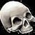 Misc Bones Skull 01.png