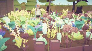 All crops 1.jpg