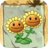 Twin_Sunflower2.png