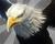 EagleIcon.png