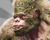 Everbloom Gorilla Bestairy Icon.png