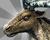 Sacred Reindeer Bestairy Icon.png
