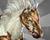 PegasusIMG.png