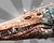 OasisCrocodileIMG.png