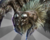 King Jungle Spider Bestairy Icon.png