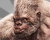 Silvermight Gorilla Bestairy Icon.png