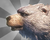 MeadowBearicon.png