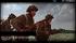 Mot. Rifles