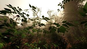 TheForestFlora.jpg