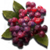 Marshberry