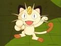 Meowth Season 1.png