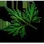 Tw3 fools parsley leaves.png