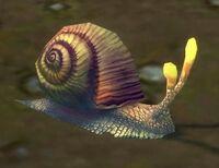 Image of Silkbead Snail