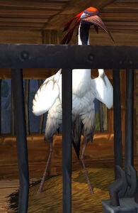 Image of Ancient Bloodcrown Crane
