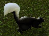 Image of Highlands Skunk