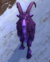 Image of Kafa-Crazed Mountain Goat